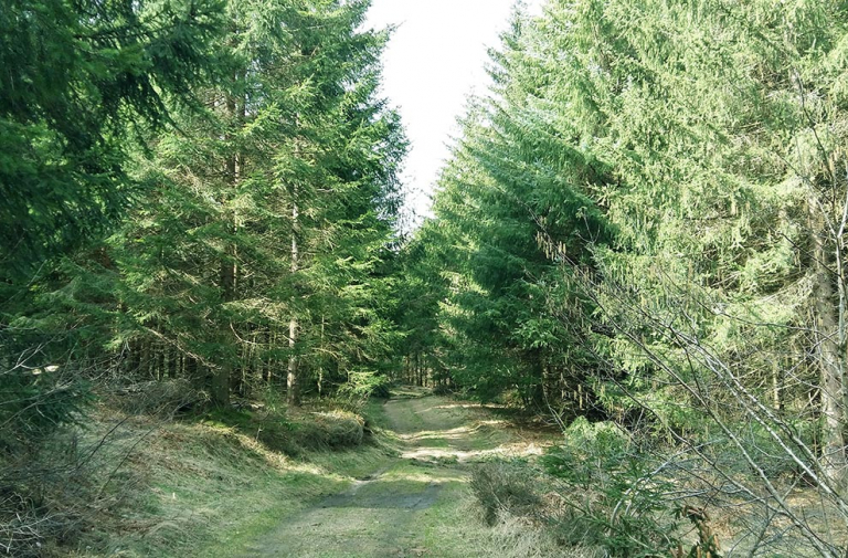 FOREST THERAPY WORKSHOPS